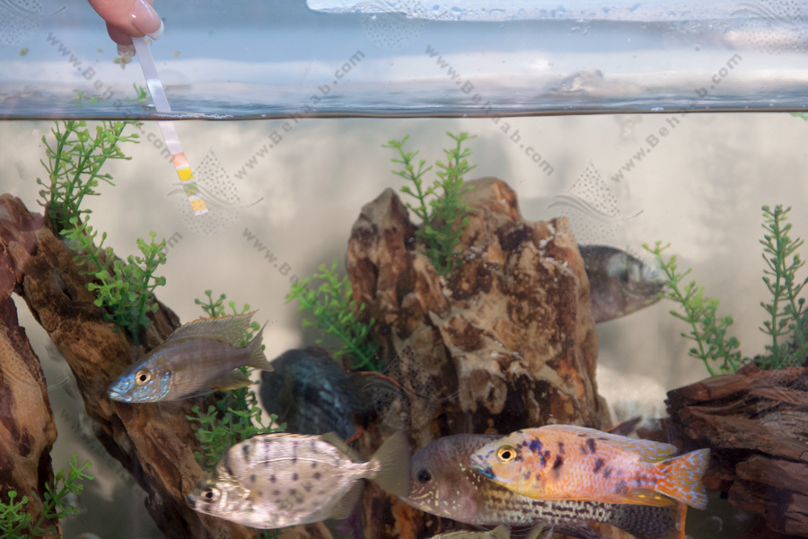 Aquarium Water Measurement with Lithmus Paper اندازه گیری آب آکواریوم با کاغذ تورنسل