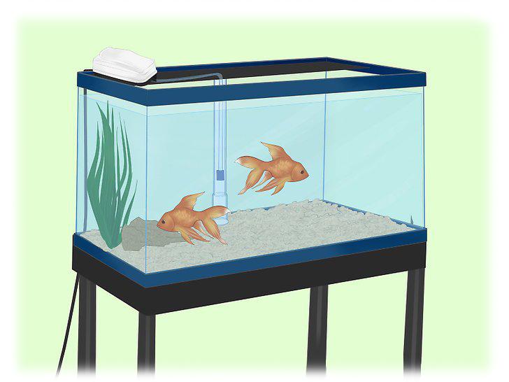 How to Install an Undergravel Filter in Aquarium مراحل نصب و راه اندازی فیلتر زیر شنی آکواریوم