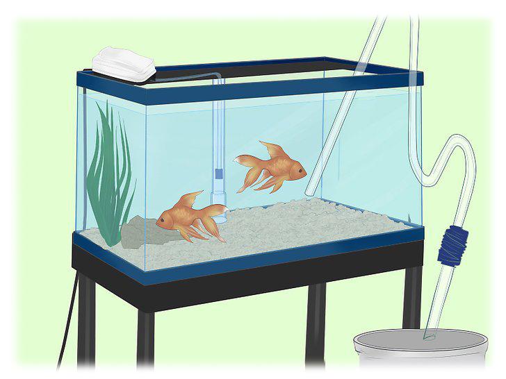 آموزش نصب فیلتر زیر شنی آکواریوم How to Install an Undergravel Filter in Aquarium