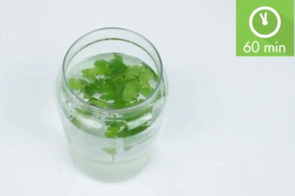 تصفیه آب با مواد شیمیایی Treating Water With Chemicals